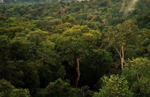 Excursiones por la selva amazónica